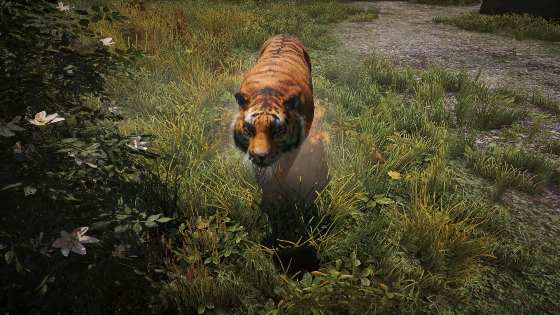 Far Cry 4 Tiger Fish Far Cry 4 Tiger